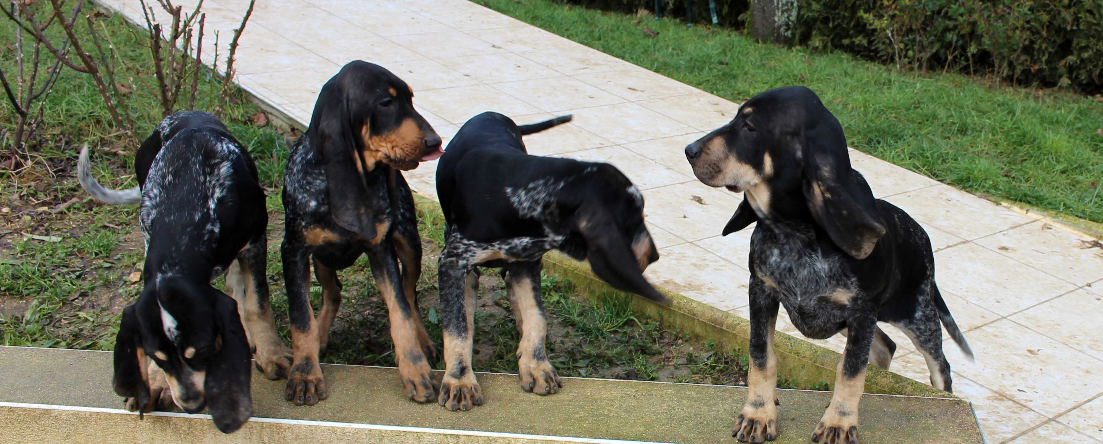 image-chiots